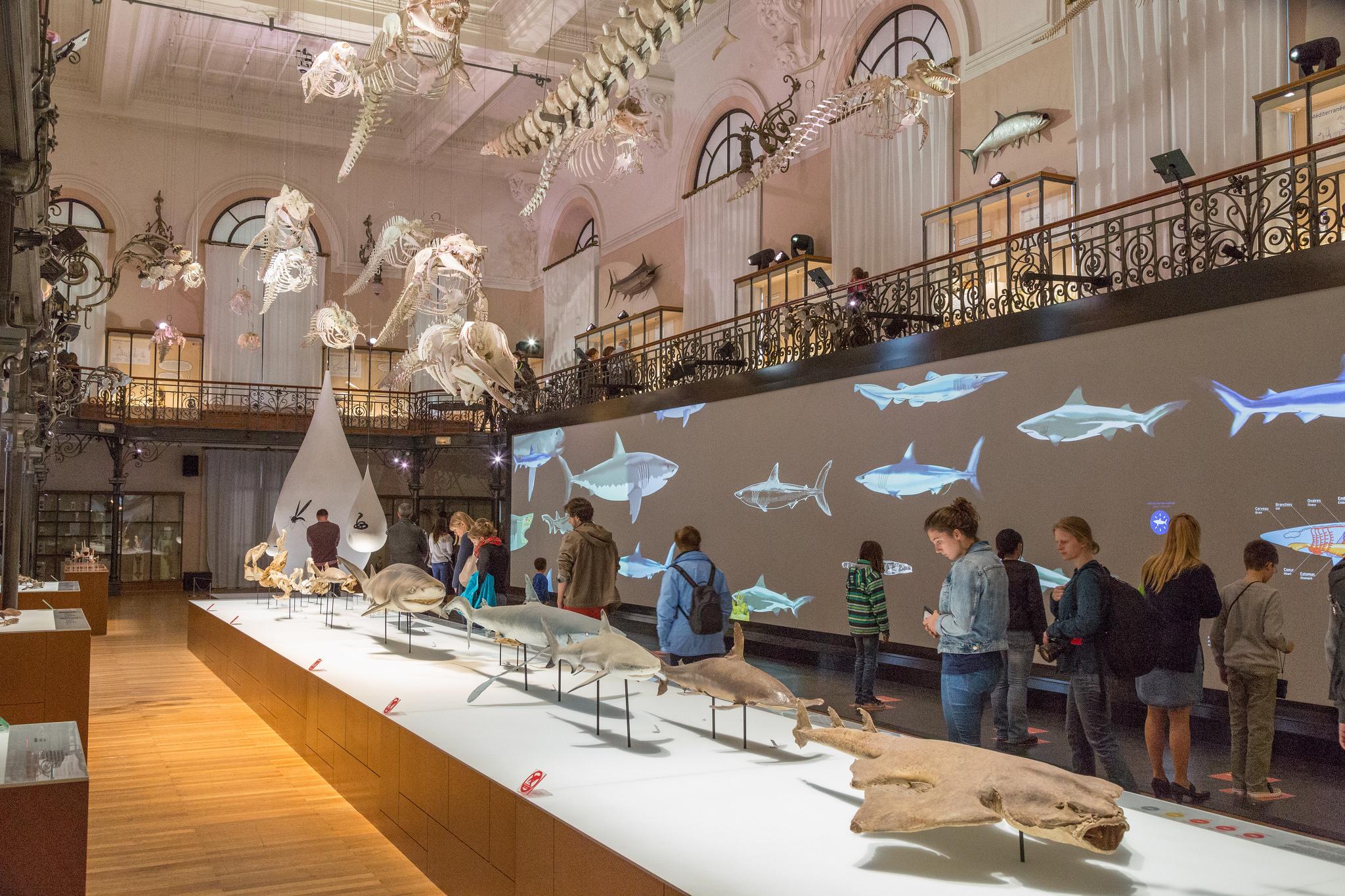 Oceánografické muzeum nabízí spoustu poznání, Bernard Santucci