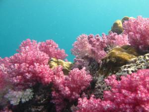 Podmořská scenérie