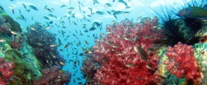 Nádherný podmořský svět na Koh Lipe