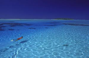 Potápění si užijete díky bohatému podmořskému světu