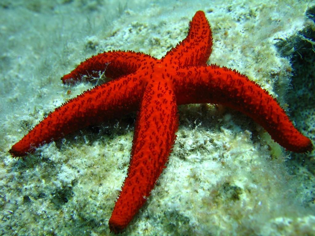 starfish-496836_1280