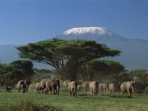 www.explore254.com-mount-kenya-national-park
