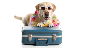 Vyrazte na dovolenou i se svým čtyřnohým kamarádem