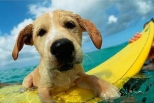 Psi vodu většinou milují, ale nezapomínejte, že by neměli být dlouhou dobu na slunci